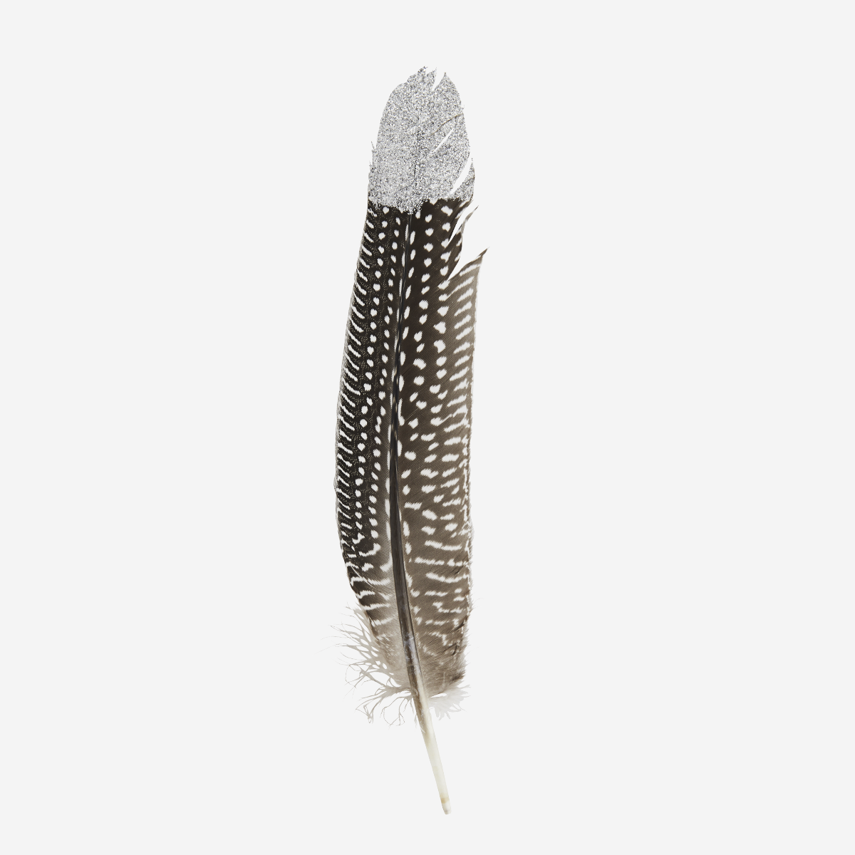 Dotted two tone goose feathers